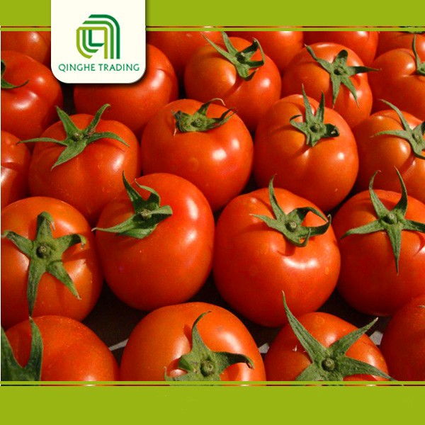 good brand farm fresh tomato tomatoes green tomato for wholesales