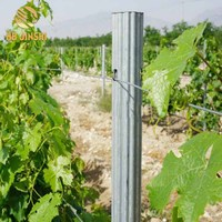 50*34mm Heavy Duty Galvanized Vineyard Trellis Grape Post Stakes