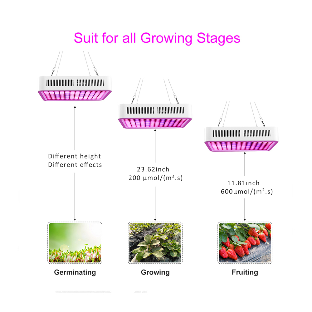 Best Price Double-chip LED Grow Light for Indoor Plants