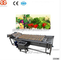 Fresh Vegetable Fruit Cleaning and Drying Processing/Dates Palm Cleaning and Drying Line