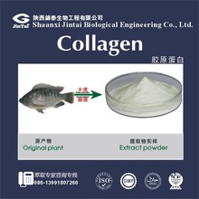 High Quality Fresh Fish Extract Collagen Powder Supplier