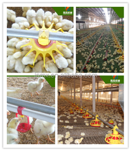 complete chicken equipment control shed poultry farming cost