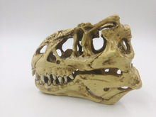 Artificial resin Tyrannosaurus Rex Dinosaur Crafts decoration animal Dinosaur fossil skull Model