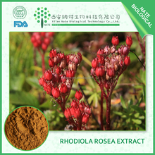 100% Pure Natural Rhodiola Rosea Extract 3% 5% Rosavin Salidroside by HPLC