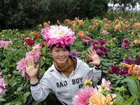 Chinese Best gardening seeds dahlia seeds for wholesale All colors