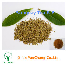 Top quality Natural Yerba mate extract 10:1