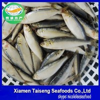 Frozen Style and Fish Product Type Ocean fish Sardines