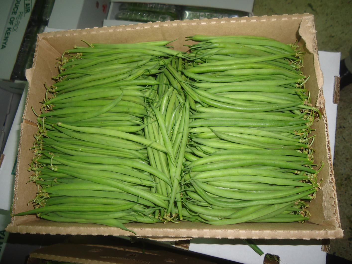 Best Quality French Beans