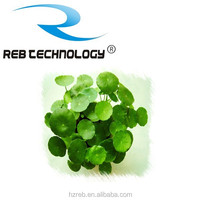 REB 100% natural herbal Gotu kola extract Total Of Triterpenes 10%~80%