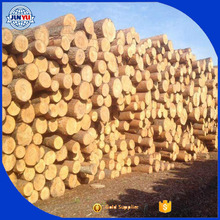 2016 Fresh cut wood logs round logs for sale Pine logs