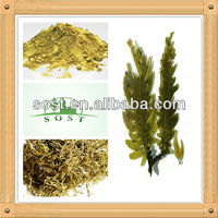 natural herbal undaria pinnatifida extract