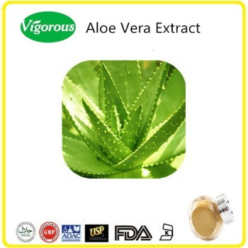 Organic freeze dried Aloe vera extract powder 200:1
