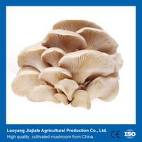 Pleurotus ostreatus/ Oyster Mushrooms Best Price For Buyers From China