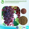 Whitening skin care Grape Seed P.E. extract