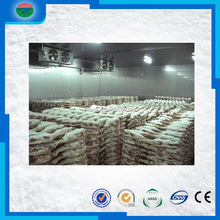 Unique style promotional meat fish blast freezer/cold storage/cold room