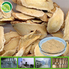 GMP supplier astragalus mongholicus lowest price