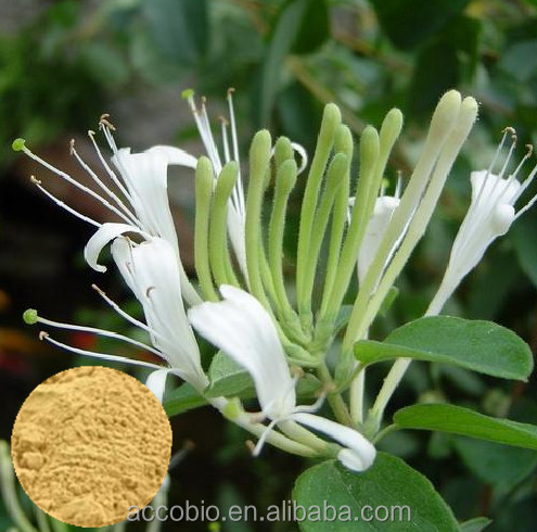 High Quality China Supplier HoneySuchle Extract/Extract From Flos Lonicerae
