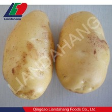 Certified HALAL/ GAP Price of New Fresh Potatoes for KLANG, MALAYSIA