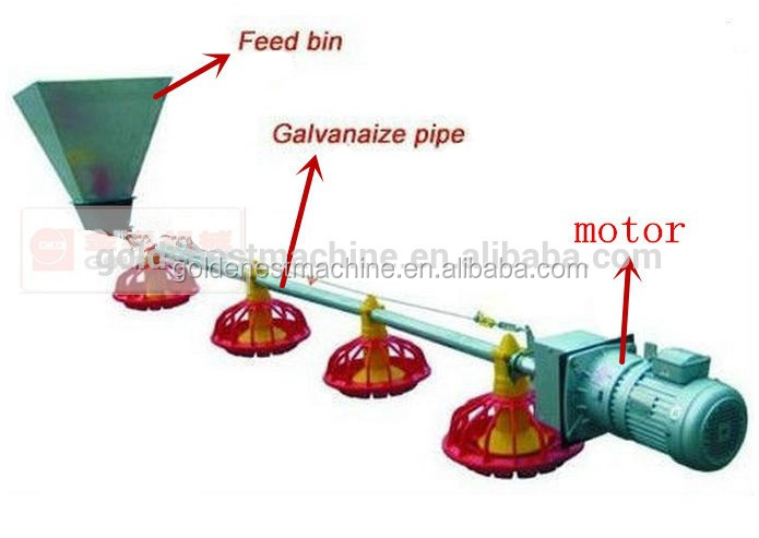 Poultry Broiler And Breeder Feeder And Drinker System With