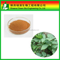 100% Natural Black Cohosh P.E/Triterpenoid Saponins Powder