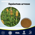Natural Equisetum Arvense / Horsetail Extract Powder