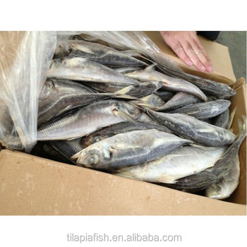 Very good horse mackerel price