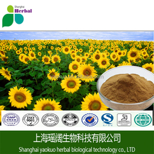 Pure natural Sunflower Extract/Sunflower Seed Extract Powder/Helianthus annuus seed Powder