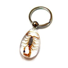 Fashionable real insects Scorpion resin specimen keyring for men