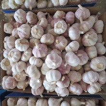 normal white garlic for Tunisia
