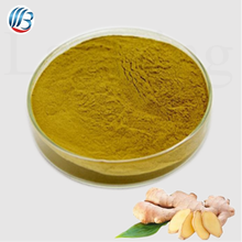 GMP bulk natural high quality water soluble ginger extract powder
