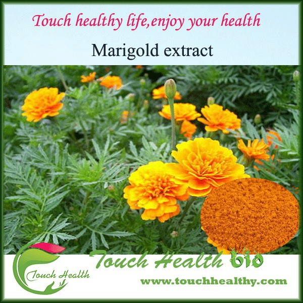 2016 Touchhealthy Supply Marigold extract lutein ester,zeaxanthin and lutein powder,water soluble lutein
