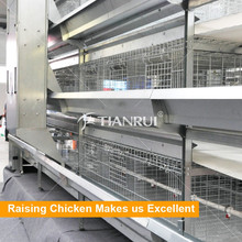 Hot galvanized steel multi-tiers Pullet raising equipment Baby Chicken Cage