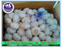 the reasonable price of fresh garlic export to SOUTH EAST, MIDDLE EAST, RUSSIA