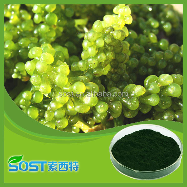 Dietary Fiber spirulina chlorella powder