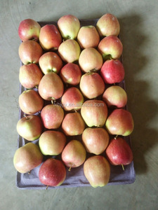 fresh red star apple to Bangladesh
