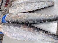 frozen wahoo fish from china