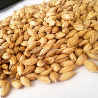 cheapest price of hulled malting barley