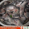 Whole Round tilapia fish 800g+ Frozen chopa