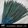 Decorative Ringneck Pheasant Feather For Carnival AH57