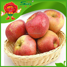 wholesale prices apple fruit fresh honey apple