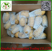 Potato Specification 125-275g Packing In Carton Export To the UK/Singapore Price