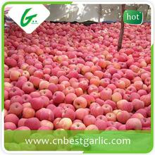 Best price fresh bulk red fuji apple specification