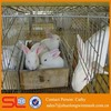 high quality welded rabbit cage wire mesh for hot sale