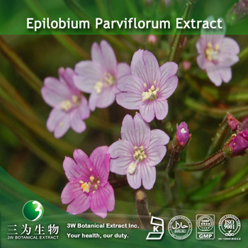 Epilobium parviflorum extract 10:1 used for health care