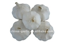 2011 Crop Fresh Garlic 5.0CM from shandong,china--Cheap!