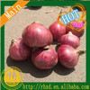 /product-detail/fresh-onion-export-to-dubai-fresh-chinese-onion-60575816459.html