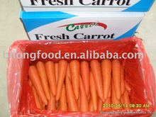 wholesale new crop fresh carrot