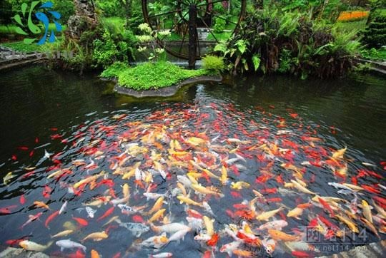 Mbbr plastic bio filter media 4 hole media for koi pond for Biofilter for fish pond