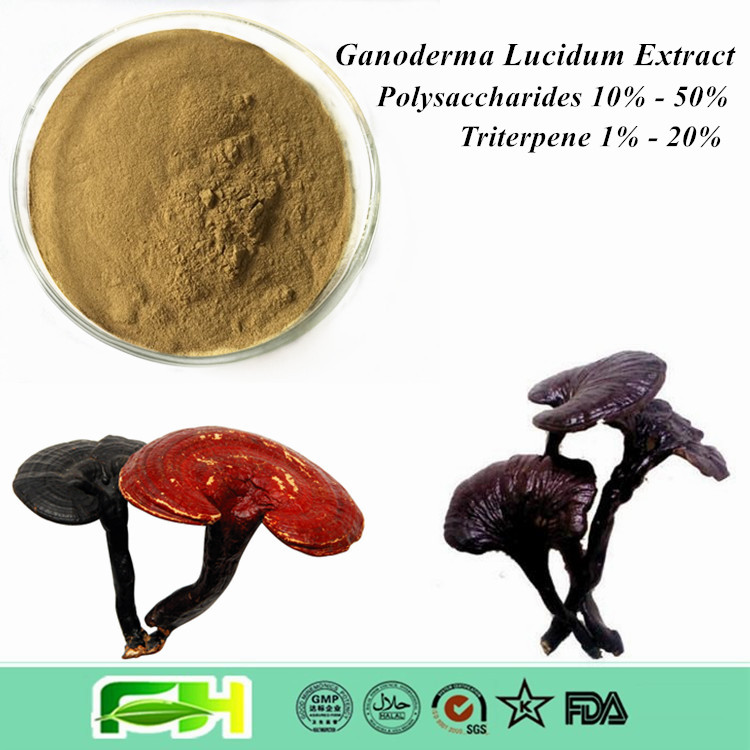 Most Popular Natural Ganoderma Triterpenoids , Ganoderma Lucidum Polysaccharides , Ganoderma Lucidum Extract