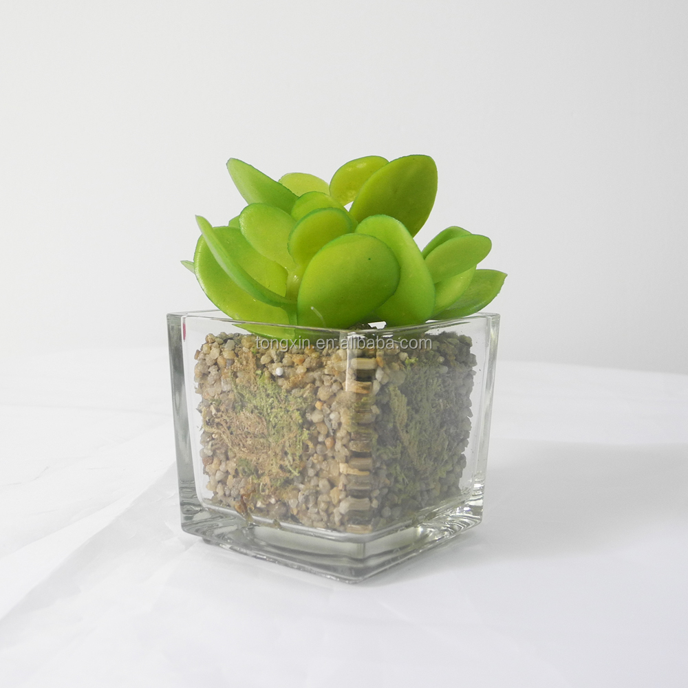 factory direct sell hotel decor green succulent plant with glass